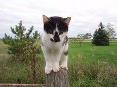 Cat On Post (Stock Photo By mattsgirl) [ID: 644426] - stock.xchng