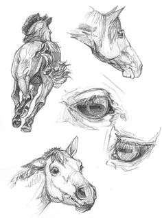 horse cheval horse pose draw a horse croquis de cheval sketch draw horse dessiner un cheval horse sketch sketch of horse r f rence pour cheval horse reference horse model # Horse Drawings, Art Drawings Sketches, Animal Drawings, Drawing Animals, Illustration Tumblr, Fantasy Illustration, Arte Equina, Horse Sketch, Horse Anatomy