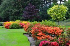 Las Mejores Plantas Grandes Para Exteriores.  Las plantas, flores y árboles son la parte natural más importante que se puede tener en todo jardín. Si estas empezando con el diseño y decoración de tu jardín, ... Ver más aquí: https://jardinespequenos.com/las-mejores-plantas-grandes-para-exteriores/