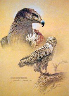 Art Print Ferruginous Hawk by Michael Dumas | eBay