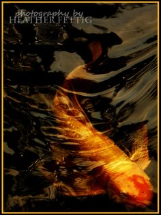 Smiling Koi 5 x 7 giclee print by TwoBlueRavens on Etsy, $10.00