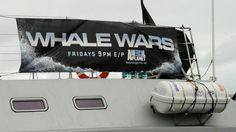 The Whale Wars banner. Sea Shepard, Whale Wars, Brigitte Bardot, Marina Del Rey, Animal Planet