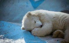 Buonanotte...che al vostro risveglio possiate scoprire di avere un cuore