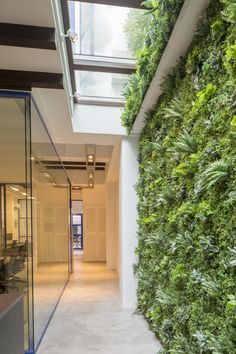 Aquilus office: Vertical green wall - fake inside, real outside - glass open roof - in a shophouse in singapore Patio Interior, Home Interior Design, Vertical Green Wall, Wall Design, House Design, Garden Office, Skylight, Office Interiors, Halle