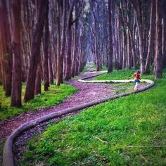 Go to hike: San Francisco, California Artist Andy Goldsworthy's Wooden Line