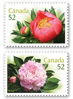 More flowers...I use a lot of stamps, but I've never seen these at the post office before!?