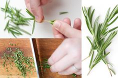 Cooking with Fresh Herbs 101