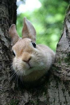 Peek-a-boo. How did this rabbit get in a tree? Whoever heard of a rabbit in a tree? Cute Baby Bunnies, Funny Bunnies, Cute Baby Animals, Animals And Pets, Funny Animals, Cute Babies, Bunny Bunny, Bunny Rabbits, Funny Pets