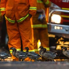 The ABC's John Donegan snapped the local wildlife getting close with Rural Fire Service teams near Windsor, New South Wales, on October 22 Australia Weather, Australia Day, Bushfires In Australia, Bbc World Service, Bird People, Australian Bush, Daylight Savings Time, Long Shadow, Natural Life