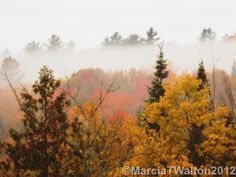 Adirondacks Forest Trees Fog Sunrise by AdirondackMtnImages, $30.00