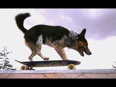 Impresionante Perro haciendo Parkour