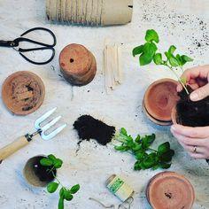 Preparing plants  Du finder økologisk jord keramik potter og øko frø i butikken >> link i profilen  #urbangardencompany #havehygge #urbangardening #urbangarden #urbangardenersrepublic #gardenista