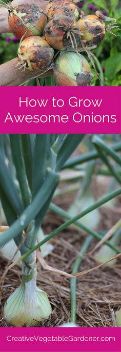 There are a few tricks to growing great onions in your garden.