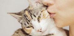 Comment faire plaisir a son chat