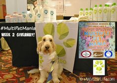 My GBGV Life   Pet Friendly Cleaning With PL360 #MultiPetMania Enter to win a $75 cleaning package!