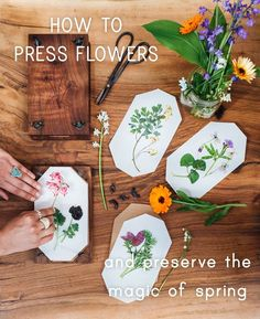 how to press flowers - pistils nursery