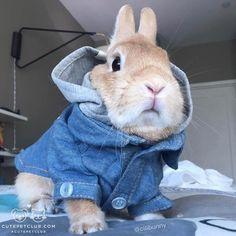 Bunny in a hoody