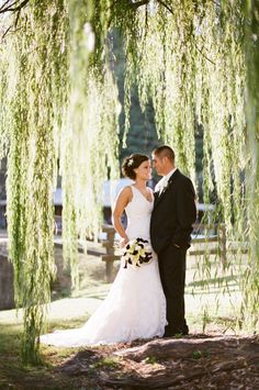 under the willow tree...