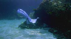 Mako Mermaids - S2E3 Discovery Mermaid Swimming, Mermaids And Mermen, Merfolk, Discovery, Whale, Moon, Fish, Fantasy, Island