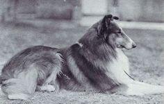 King Hector Grandsire of Treve