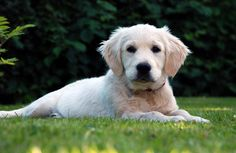 Cute Puppies And Doggies - cute puppies | Cute Little Puppies Gallery