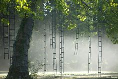 Trees with Ladders: Tree Climbing for Adults