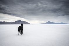 Bonneville Salt Flats by Ty Popko