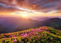 Photo about Mountains during flowers blossom and sunrise. Flowers on the mountain hills. Beautiful natural landscape at the summer time. Image of sunlight, land, summer - 136448735 Summer Landscape, Mountain Landscape, Mothers In The Bible, Sunrise Spring, Sunrise Mountain, Natural Background, Kingdom Of Heaven, Water Life, Beautiful Sunrise