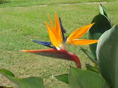Basic Care for Birds of Paradise: How to Grow Exotic Flowers and Tropical Plants