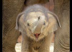 baby elephant...so cute!  God is so amazing, the way He makes ALL BABIES so cute!
