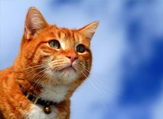 Cat Breed Guide: Choose the right cat for your family!
