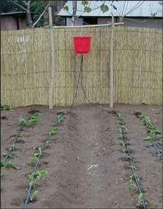 Drip bucket irrigation system