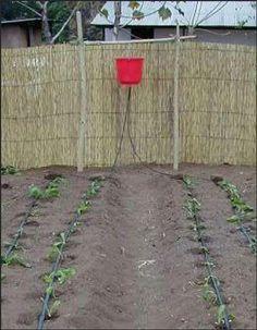 Drip bucket irrigation system