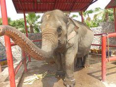 Hutsadin Elephant Sanctuary in Hua Hin, Thailand Stuff To Do, Things To Do, Elephant Sanctuary, Thailand, Fun, Animals, Things To Make, Animales, Animaux