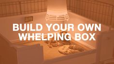 Watch this video to learn how to build your own dog whelping box very simply! Your bitch will thank you, so will her puppies: strong, warm and safe.