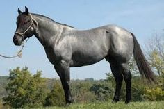 Resultado de imagen para caballos  colores