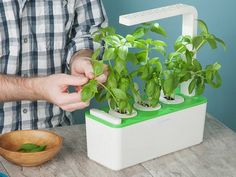 Click & Grow's herb planter, discovered by The Grommet, lets you grow herbs all year long, even if you don't have a green thumb or space for a full garden.