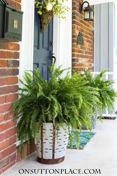 Olive bucket planters filled with ferns add a vintage farmhouse element to any front porch. DIY and easy to do!