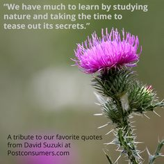 Favorite David Suzuki Quotes: We Have Much to Learn - Postconsumers Reduce Reuse, Reuse Recycle, Earth Day Quotes, David Suzuki, Nature Secret, Planting, Gardening, Earth Day Crafts, Outdoor Education