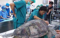 В Таиланде спасли черепаху, достав из ее желудка 915 монет — В Курсе Жизни