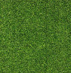 XOO Plate :: Lush Green Grass Texture Background - Eco green grass texture vector background.