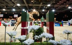 www.pegasebuzz.com | Equestrian photography : Longines Hong Kong Masters 2015 by Mike Pickles.