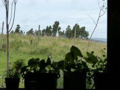 mi ventana.  http://enunbosque.blogspot.com/