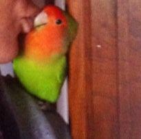 Ulisse bacio