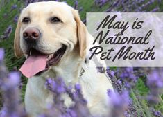 Is Pet Insurance Worth It? Nutrition Guide, Diet And Nutrition, Pet Health Insurance, Guide Dog, Homemade Dog, Dog Food Recipes, Labrador Retriever, Pup, Dogs