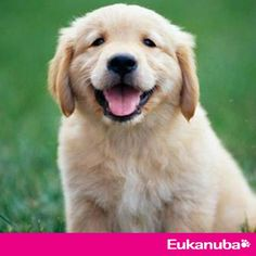 Helen Zulch will discuss How to help your puppy learn the right things!It's free Webinar, join us!