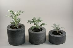 "Round Concrete Pot - set of 3 4 inches in diameter, and they are 2"", 3"" and 4"" tall"