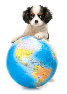 ASPCA | Go Green for Pets
