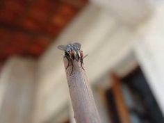 Download:Mosquito Caseiro (Wallpaper) - http://hypedownloads.com.br/mosquito-caseiro-wallpaper.html