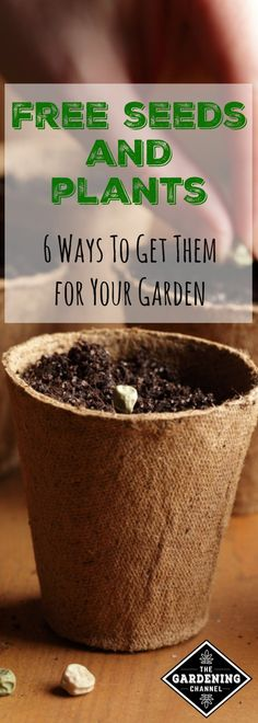 Learn how to add to your garden harvests with these six ways to get free seeds and plants.